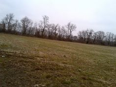 warppedgreenfieldtrees