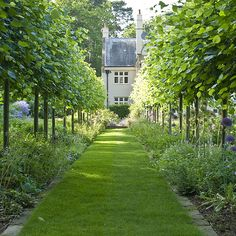 An elegant Arts & Crafts style garden in the Surrey Hills consisting of formal lawns and terraces, tree lined walks and water features, and a 'thunder house', all softened with traditional Gertrude Jekyll-style planting