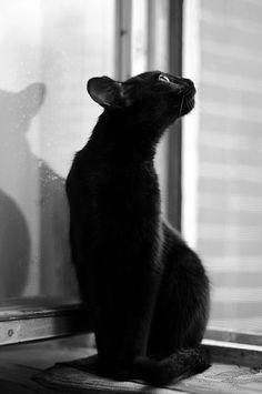 my black cat by Al Cvami