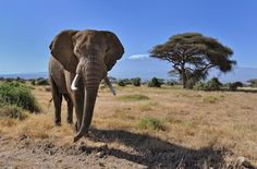Enjoy the best #TailorMadeHolidayinTanzania with your family. Know more @ http://realitywildadventures.com/