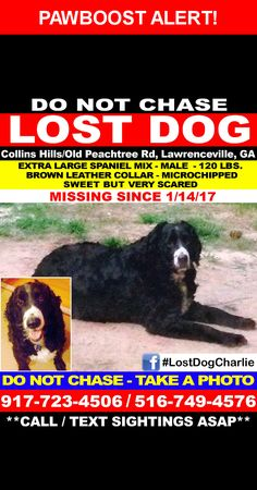 Please spread the word! Charlie was last seen in Lawrenceville, GA 30043.  Description: 120 lb  neutered and microchipped black golden/spaniel mix and very timid but friendly.
