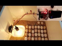 How to make a Hatching Egg Incubator at home Homemade Incubator, Diy Incubator, Chicken Incubator, Urban Chickens, Baby Chickens, Building A Chicken Coop, Diy Chicken Coop, Hobby Farms, Chicken Eggs