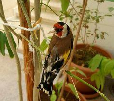 Goldfinch, Pigeon, Reptiles, Birds, Facebook, Twitter, Google, Youtube, Instagram