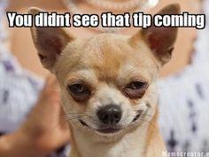 Effective Potty Training Chihuahua Consistency Is Key Ideas. Brilliant Potty Training Chihuahua Consistency Is Key Ideas. Chihuahua Love, Chihuahua Puppies, Chihuahuas, Chihuahua Facts, Black Chihuahua, Pomeranians, Dachshunds, Doggies, Pugs