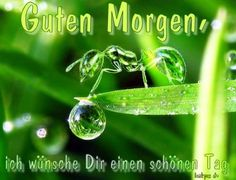 für euch einen wunderschönen guten morgen 3d Wallpaper For Laptop, Good Night, Good Morning, Morning Images, Get The Job, Macro Photography, Getting Things Done, Daily Quotes, Shades Of Green