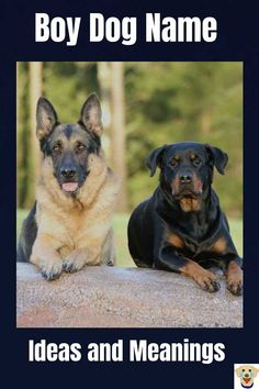 Need ideas for boy dog names? We have Male Dog names and meanings. Know the meaning of all your boy puppy names before you decide. Good Boy Dog Names, Male Dog Names List, Boy Dog Names Unique, Boy Puppy Names, Names Girl, Pet Names, Names For Dogs Boys, Rottweiler Names, Rottweiler Puppies