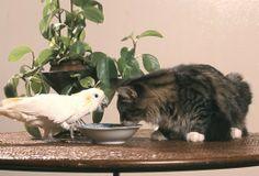 Kot i ptak w jednym domu - czy to możliwe?