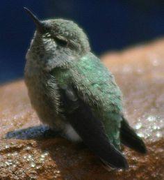 I love hummingbird.