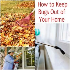 Take a few preventative steps to keep pests out of your home this winter. Do your own pest control with our step-by-step guide.
