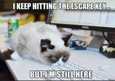 Funny grumpy cat, funny grumpy cat quotes, grumpy kitty ...For the ...