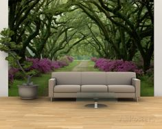 A Beautiful Pathway Lined with Trees and Purple Azaleas Wall Mural – Large