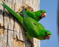 parrots. #parrotsinpairs