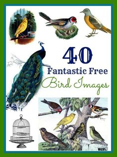 40 Best Bird Images!! - Graphics Fairy. So many beautiful free vintage bird graphics to print and use in craft projects and DIY Home decor. Or make your own Printables!
