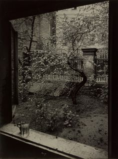 Josef Sudek, The Window of my Studio - Spring in my Garden, Prague, 1954.➕More Pins Like This One At FOSTERGINGER @ Pinterest ➖
