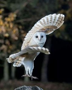 Hottest Pictures birds of prey owl Suggestions As being a wild birds of fodder photography, the most important difficulty the majority of make a complaint p Beautiful Owl, Animals Beautiful, Cute Animals, Owl Photos, Owl Pictures, Rare Photos, Funny Bird, Photo Animaliere, Owl Bird