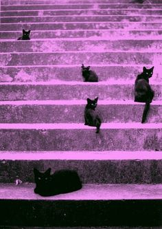 black cats.. dare ya to cross their path!