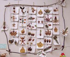 treballs amb fulles  DOCUMENTAR A L'ESCOLA - http://degrapespasapaseneducacio.blogspot.com.es/2014/01/documentar-lescola.html