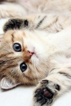 """If a feline creature appears to be in the initial stages of an Upidedownedness episode, he or she may say, """"Rub my belly"""". Do it- they know they suffer the disorder."""
