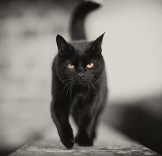Gorgeous black cat.