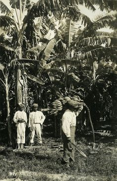 vintage everyday: 35 Rare Vintage Photos of Everyday Life in Jamaica before 1900