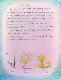 Waldorf ~ 5th grade ~ Botany ~ Mosses ~ main lesson book: