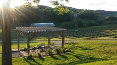 7. Loess Hills Lavender Farm, Missouri Valley