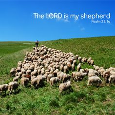 """""""The LORD is my shepherd."""" A simple statement. Once spoken by a believer, it becomes a pledge of dependence. Stating that one is following Someone who can actually lead. And care. And really love. Can you say that the LORD is your shepherd today?"""