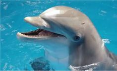 Meet Your Dolphin Guide : In5D Esoteric, Metaphysical, and ...