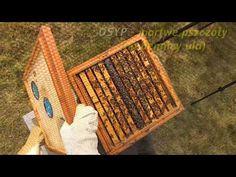 Pasieka Bzykanko - pierwszy przegląd wiosenny - YouTube