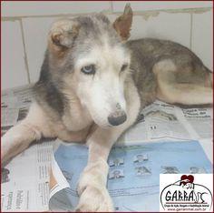 G.A.R.R.A. - Grupo de Ação, Resgate e Reabilitação Animal: Notícias da Vovó Noemia - Ajude o G.A.R.R.A.