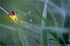 Lightening bug - one of the 2011 National Wildlife Photo Contest Winners