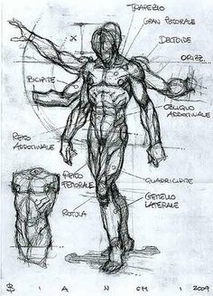 -Anatomy Sketch #48 by Simone Bianchi <BR> <BR>I wanna Design a…
