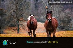 #animals #horses #facts