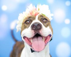 "Pawsitive Shelter Photography -  ""Reny""  - Orange County Animal Services photos!"