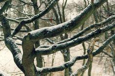 Baum im Schnee, Foto: S. Hopp