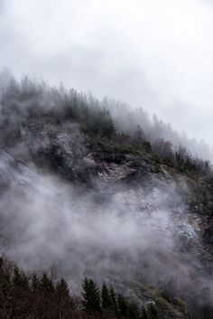 Trees in mist - Trees on mountain slope bedded in fog. Vertical composition