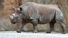 Vietnam WWF: Country Ranks the Worst for Rhino Poaching