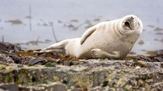Quelle: Comedy Wildlife Photography Awards / Julie Hunt (Quelle: Quelle: Comedy Wildlife Photography Awards / Julie Hunt)