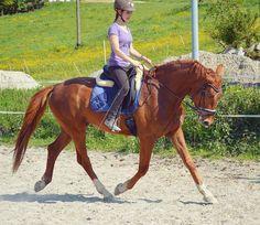 Vorschläge/Wünsche für ein neues YouTube Video? 🐎💕 #eden#erster#Trab#younghorse#dressageprecision #dressur #pferd #horseriding #equestrian #eskadron #hkm##rheinländer #wallach #ehrenstolz #rohdiamant #pferd #equi_starpost #equi_passion #european_horses #_eurepferdebilder_ #pferdefreunde_post #pferdestars#oh_post #posting_horses #instadressage #dressage #pferdeschoenheiten #oh_post #hpg_post#horsestagram#postinghorses