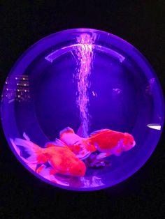 Dark Purple Aesthetic, Neon Aesthetic, Night Aesthetic, Aesthetic Images, Aesthetic Photo, Aesthetic Wallpapers, Vaporwave, New Retro Wave, Cool Fish