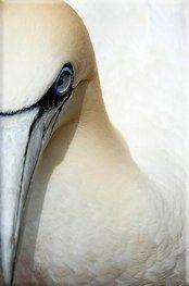 Birds < Revenir à l'index < Back to Index Birds, Photos, Animals, Photography, Pictures, Animales, Animaux, Bird, Animal