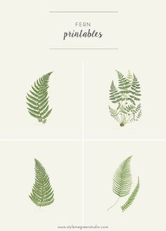 I have received quite a few emails about where I got the fern botanical prints in my bedroom. So, I thought I'd address the question with some free printables! I didn't purchase them anywhere, because I couldn't find ones that fit the frames I already had. Prints that did fit the frames, had a lot of other plants going on, and I just wanted a basic fern, no extra jib jab. So I ended up photoshopping my own prints from old scans I found at an online library archive. Library and museum a...