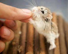 Its so cute!!!!!!!!!!