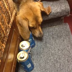 I think he over drank