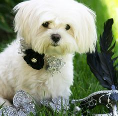 Black and Silver wedding Dog Accessories, Dog Collar with flowers, Pearl and Rhinestone, High Quality leather Dog Collar