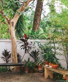 decoracao-historiasdecasa-selvvva-plantas-09