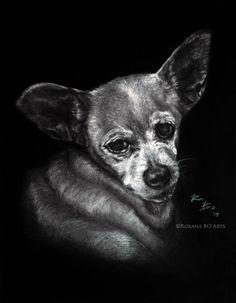 "Arte por encargo: ""BELL"" clienta: Emilia Gazel. Tecnica: Mixta (grafito-carboncillo) por https://www.facebook.com/roxanaboarts #dog #pet #bell #perro #dibujo #arte #drawing #art #mascota #roxanaboarts #roxanabo_arts"