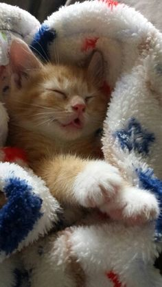 Baby kitty Sleeping! So adorable