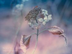 december flower by miyakokomura #nature #mothernature #travel #traveling #vacation #visiting #trip #holiday #tourism #tourist #photooftheday #amazing #picoftheday