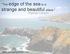 Rachel Carson Quote: The Edge of the Sea Best Picture For Earth Day Quotes environment For Your Tast Edge Quotes, Sea Quotes, Most Beautiful Pictures, Beautiful Places, Earth Day Quotes, Green Quotes, Rachel Carson, Philosophical Quotes, Famous Last Words